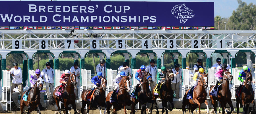 2019 Breeders Cup Dark Horses and Longshots.